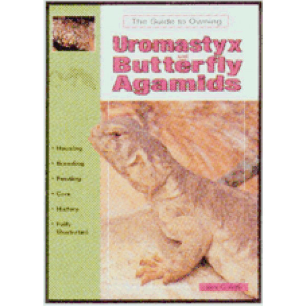 AGAMIDS, UROMASTYX, BUTTERFLY