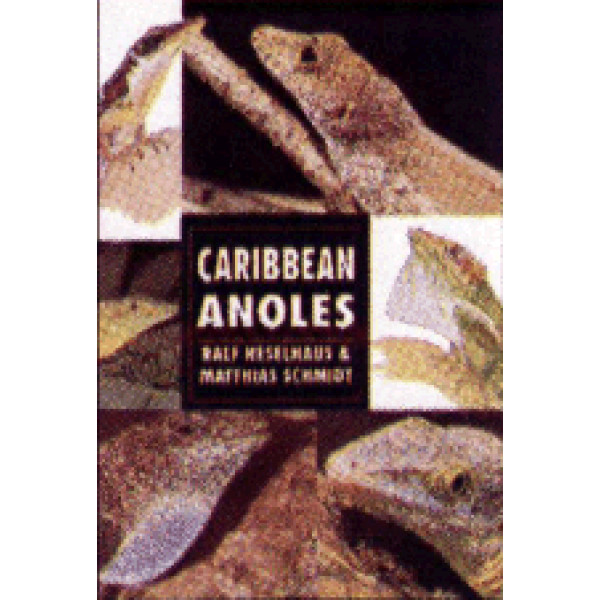 ANOLES, CARRIBEAN