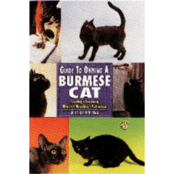 CAT - BURMESE- GUIDE TO OWNING