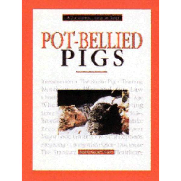 PIGS - POT BELLIED
