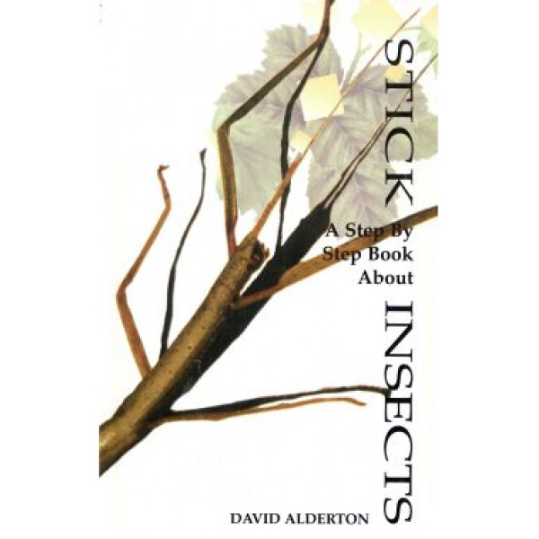 STICK INSECTS - STEP BY STEP